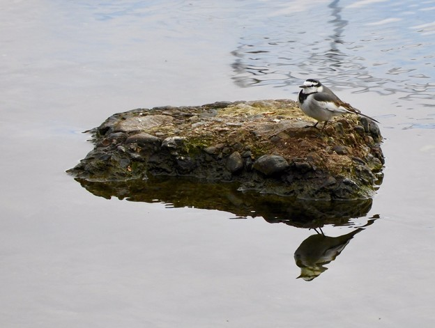 Photos: 野鳥 22