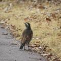 野鳥 24