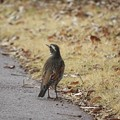 写真: 野鳥 24