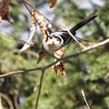 写真: 野鳥 36