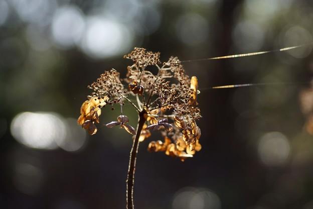 写真: 冬の陽光
