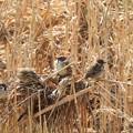 写真: 野鳥 40