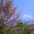 2017/04/29・・・今期最後の桜?No.01
