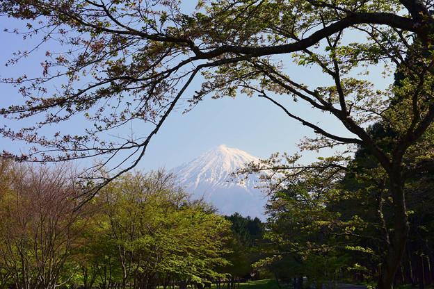 2017/04/29・・・今期最後の桜?No.03