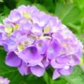 Photos: 2017/06/15・・・空梅雨気味No.03