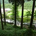 2017/07/09・・・モネの池No.02