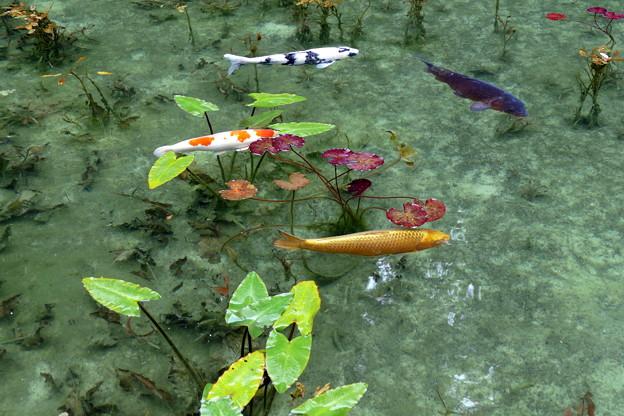 2017/07/09・・・モネの池No.07