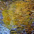 写真: 黄葉を映す 28112016