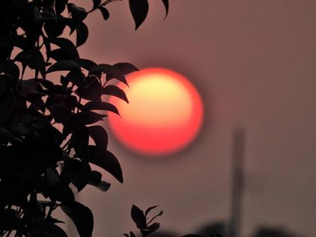 落陽06 草陰に浮かぶ魂