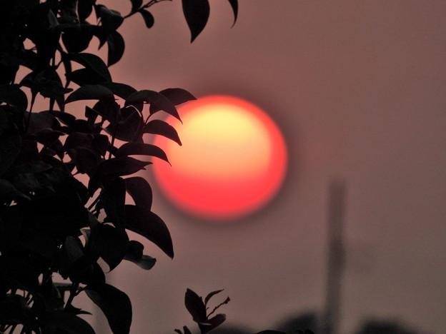 写真: 落陽06 草陰に浮かぶ魂