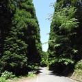 代太郎の山01 道はあれど鬱蒼と静か