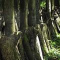 代太郎の山08 椎茸の原木のよう