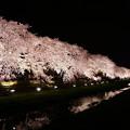 Photos: 対岸の桜 - 夕陽モード