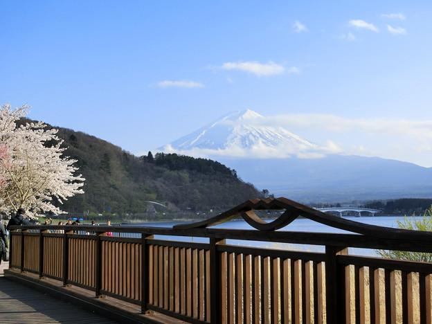 Photos: 富士山とサクラ