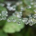 写真: 水玉がいっぱい