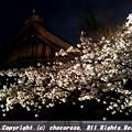 Photos: 靖国神社の能舞台
