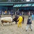 写真: NEW牛太郎VS黒牛