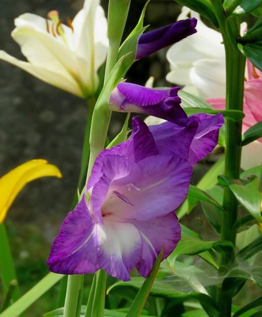 White Plumeria Flowers I 10-25-16 - 写真共有サイト「フォト蔵」