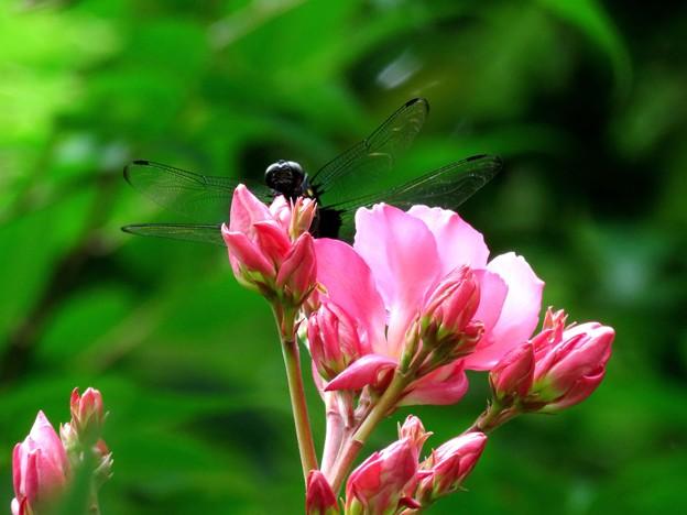 お花から覗き見