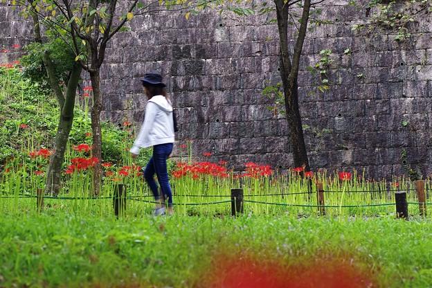 彼岸花の咲く場所