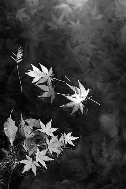 沈み逝く秋 (2)
