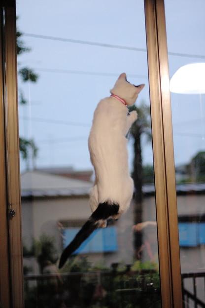 写真: 猫飛んだ