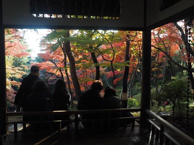 写真: 殿ヶ谷戸庭園にて3