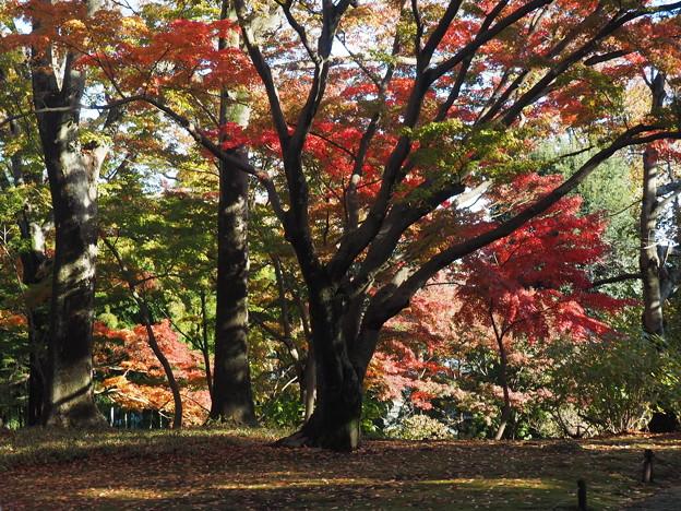 殿ヶ谷戸庭園5