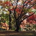写真: 殿ヶ谷戸庭園5