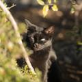 写真: 黒猫@戸田橋