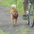 pz4020 今朝の散歩犬2