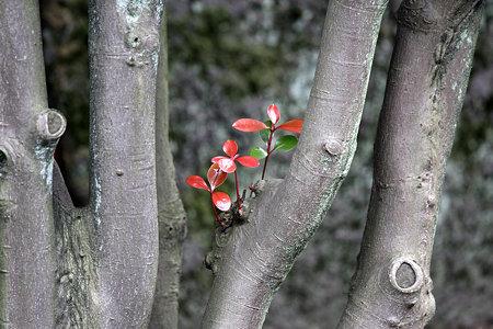 2009.06.27 皇居 新芽