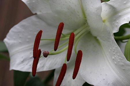 2009.07.12 カサブランカ