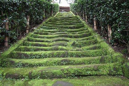 2009.08.09 鎌倉 杉本寺 苔むす石段