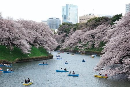 2017.04.06 千鳥ヶ淵 桜