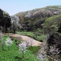 写真: 2017.04.14 里山ガーデン 新緑芽吹く里山