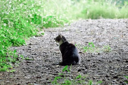 2017.06.07 瀬谷市民の森 森猫