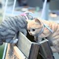 Photos: 2017.06.17 三条クラフトフェア 招き猫