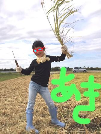 2017.09.23 越後 田圃 姫稲を刈る