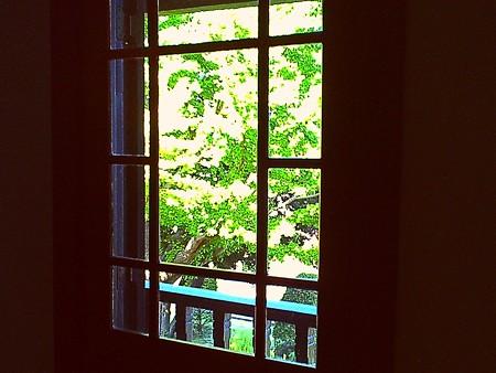 2017.10.08 外交官の家 窓から銀杏 SUN&CLOUD
