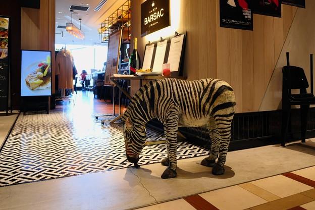2017.11.21 丸の内ビルディング MAISON BARSAC Zebra