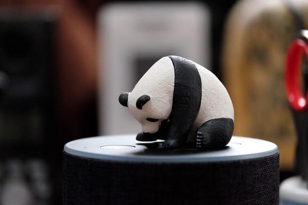 2017.12.01 机 ZooZooZoo へこむわ寝 パンダ