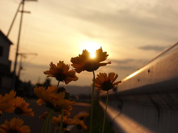 夕陽がこぼれる