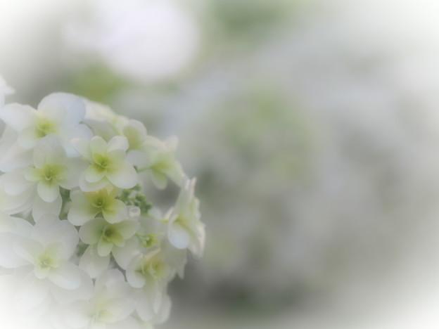 風待月の花