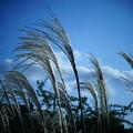 Photos: 夏と秋の境目