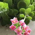 Photos: 花が咲いた~( ´ ▽ ` )