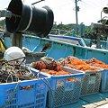 Photos: 房総の漁港:2008_0719_pwsA640_IMG_3346