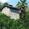 Photos: みかん山の晩夏・拾遺(予備カメラの画像から):2007_0908_A540_IMG_0301