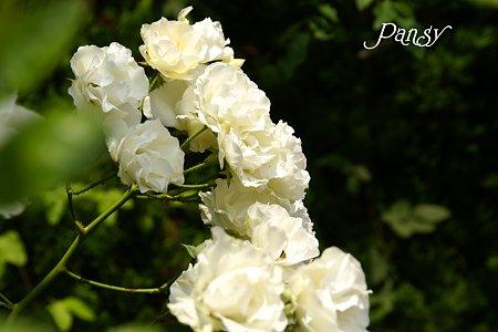 white・・