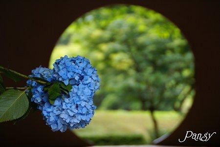 明月院ブルー・・6